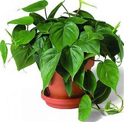 common house plants with names one checklist that you should keep in