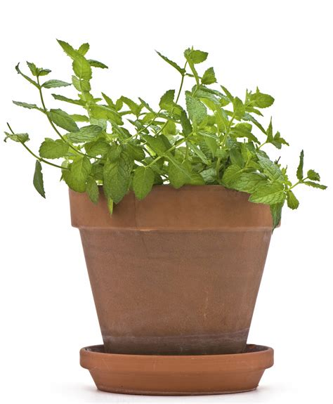 best office plant 5 best plants for your office