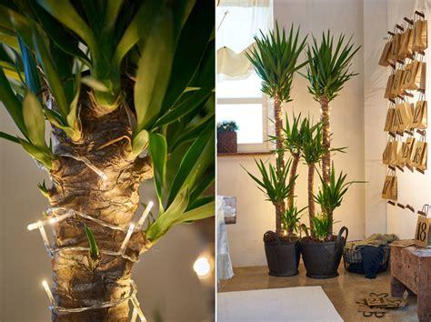 festive decor ideas  plants