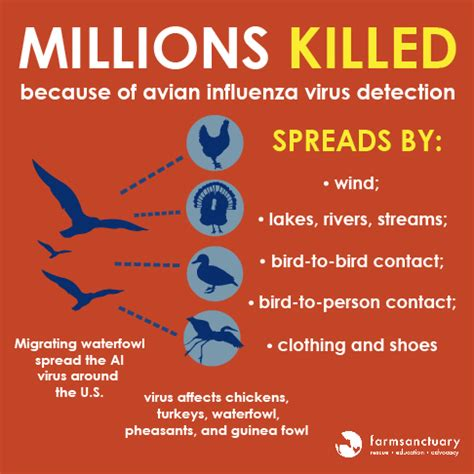 flu like symptoms after c section avian influenza symptoms pictures to pin on pinterest