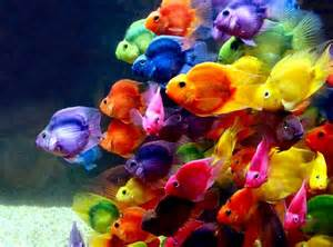 colorful fish colorful fish free images photos hd wallpapers