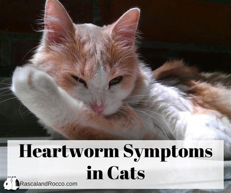 heartworm symptoms cat heartworm symptoms 2018 cats