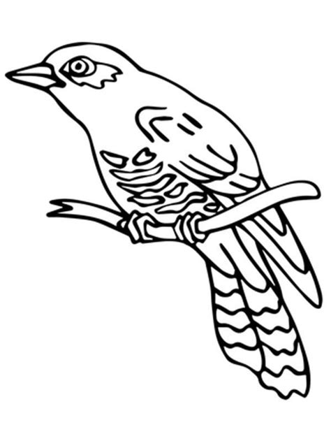 Collection Of How To Draw Cuckoo Bird Coloring Pages Sky