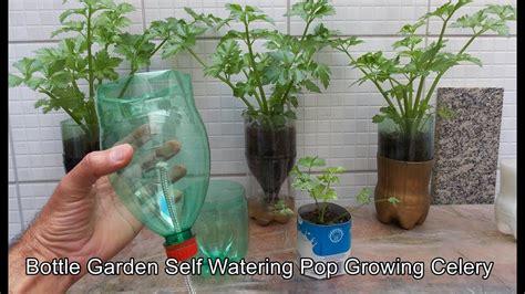 bottle garden  watering pop celery youtube