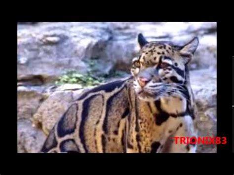 imagenes animales bellos los animales mas bellos del mundo imagenes recopilacion