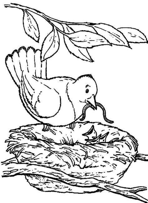 empty bird nest coloring pages