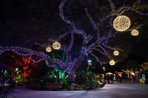 Houston Zoo Zoo Lights Lights At Houston Zoo