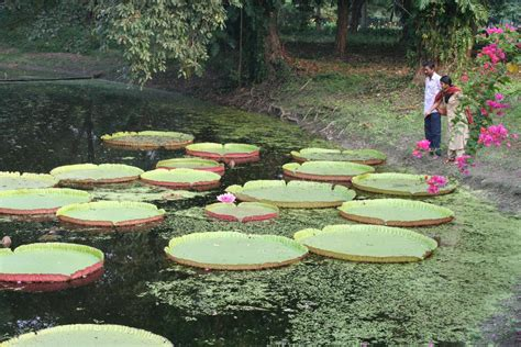 Indian Botanical Garden Images Related To Acharya Jagadish Chandra Bose Indian Botanic Garden Howrah