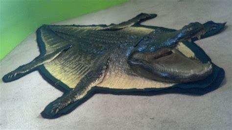 alligator rug alligator rug 3 sutton s taxidermy