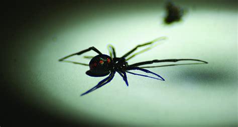 Up Side Scorpion Moge Brown black widow spiders how to get rid of black widows