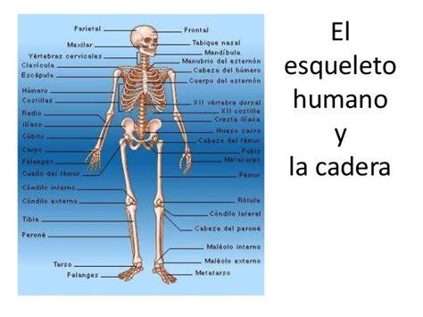 imagenes asombrosas del cuerpo humano partes del cuerpo humano related keywords partes del