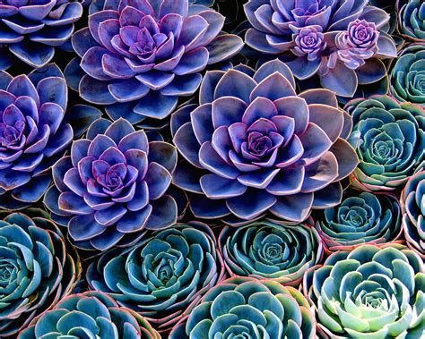 Home Decor Blogs Pinterest by The Rise Of The Succulent Plants Engledow Group