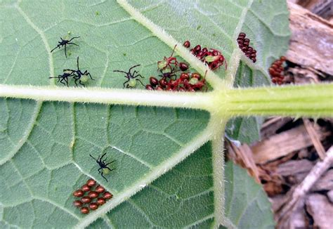 pest for vegetable garden pests of vegetable gardens insects in the city