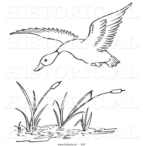 Free Pond Habitat Coloring Pages Pond Coloring Page