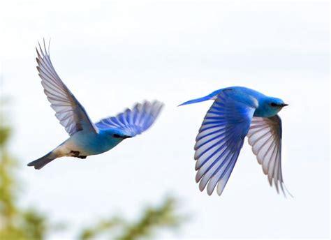 beautiful flight birds pinterest
