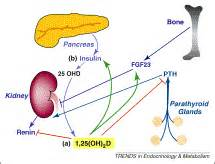 vitamin d: newly discovered actions require