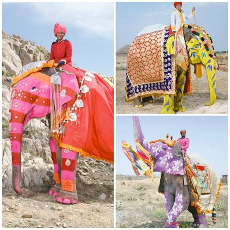 Decorated Elephants by Decorated Elephants Of India Paint Pattern