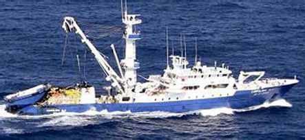 un barco pesquero ha conseguido 9100 wormius octubre 2011