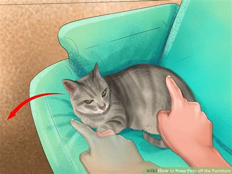 how to keep dog hair off couch best way to keep cat hair off furniture best furniture 2017