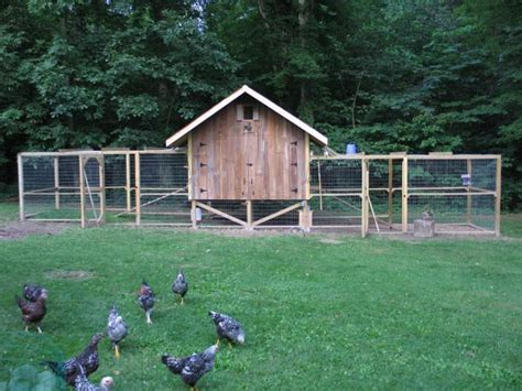 backyard chicken forum hoosierchickens s chicken coop backyard chickens community
