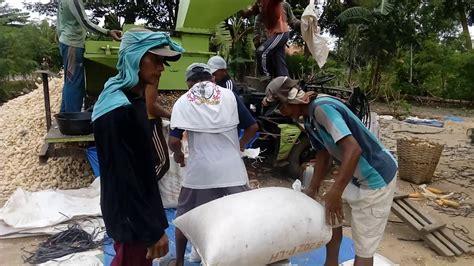 mesin perontok jagung canggih 1 ton 14 menit