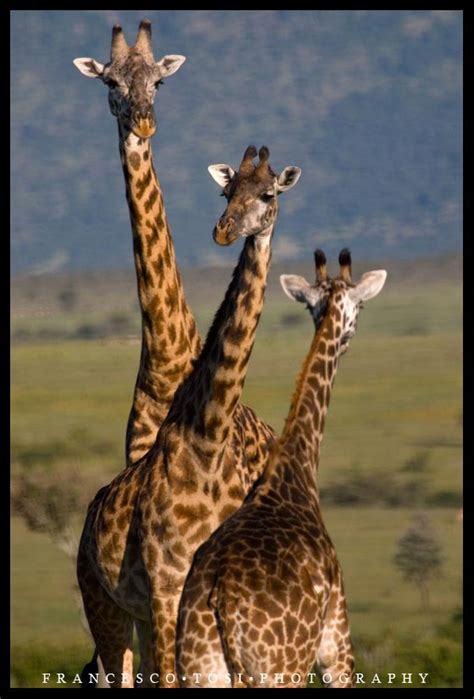 beautiful wildlife photography  frtosi