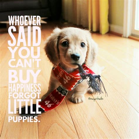 Dachshund Pictures With Quotes