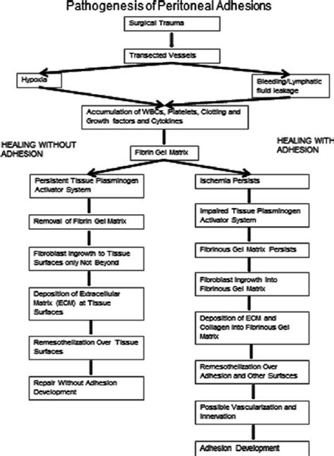 c section pathophysiology proposed scheme for the pathogenesis of peritoneal
