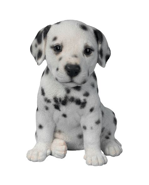 how much are dalmatian puppies dalmatian puppy transparent png stickpng