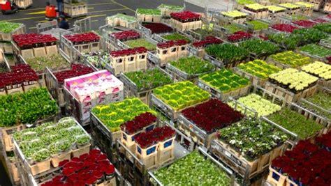 aalsmeer mercato dei fiori cosa vedere in olanda floraholland l asta dei fiori