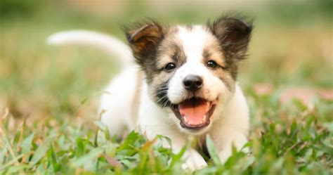 what breed should i get quiz breed quiz what type of should i get breeds picture