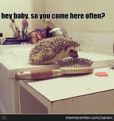 Hedgehog Meme - hedgehog memes best collection of funny hedgehog pictures