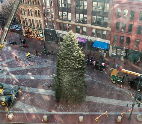 portland s christmas tree is delivered lit up press herald