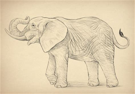 Cool Things To Draw Realistically by How To Draw Animals Envato Tuts Design Illustration