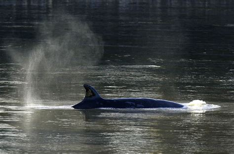 thames river animals seriously unexpected marine mammals are being spotted in