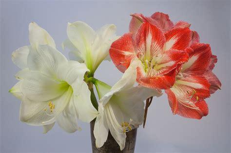 fiori invernali per matrimonio 7 fiori per un matrimonio invernale lombarda flor