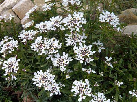 fiori autunno inverno la finestra di stefania quali fiori piantare in autunno e