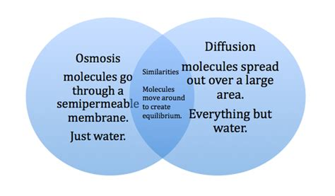 diffusion and osmosis venn diagram rivera raiders biology october 2013