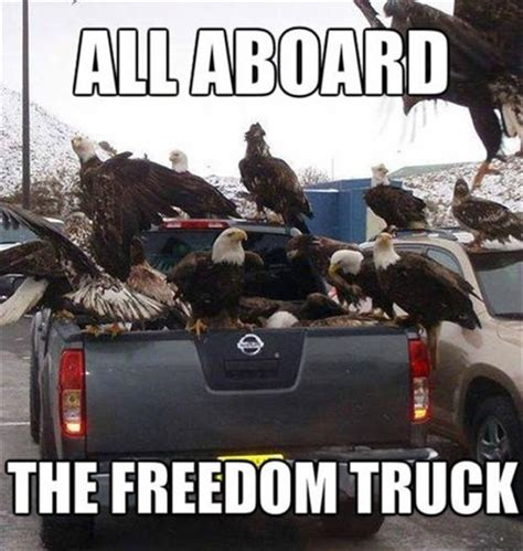 Freedom Meme - bald eagles freedom funny pictures dump a day