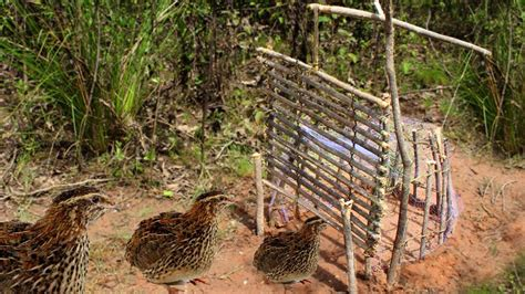 survival trapping pheasant and ground bird traps books awesome survival bird traps and snares how to make