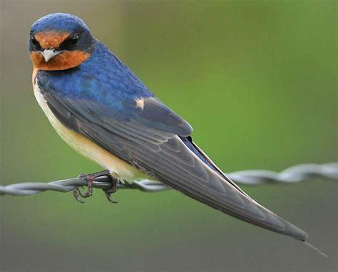 dealing with barn birds farmtek blog