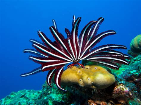 How To Bring A Plant Back To Life beautiful feather stars bring back the 70s mnn mother