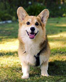 Corky Hund by Corgi