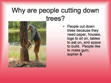 why are trees 28 images why do we need trees to