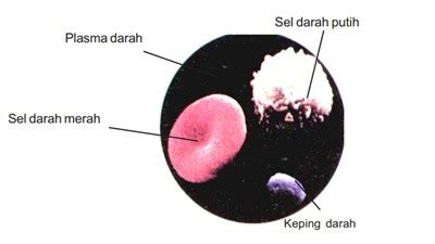 tugas biologi kelompok  xi ipa rsbi