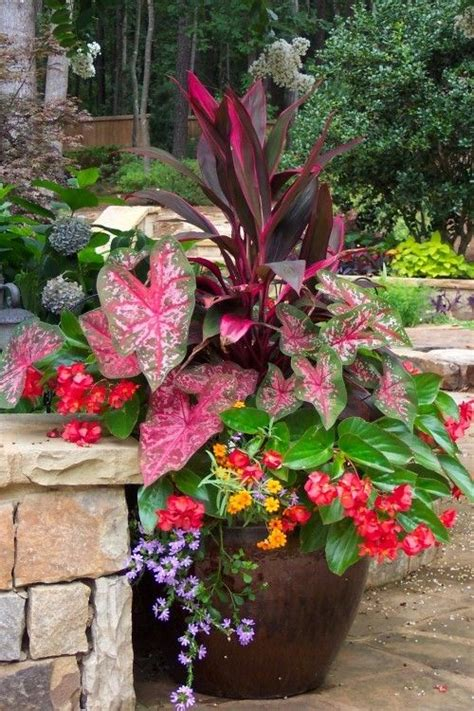 great plants for shaded areas container gardening