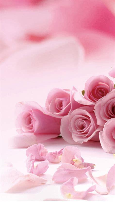 pink roses iphone 6 plus hd wallpaper iphone wallpapers pink roses flowers iphone 6 plus hd wallpaper hd free