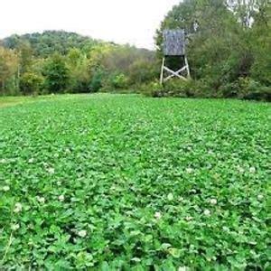 3# deer greens & clover food plot seed mix w/ clovers