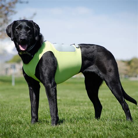 calming vest for dogs weight vest for dogs breeds picture