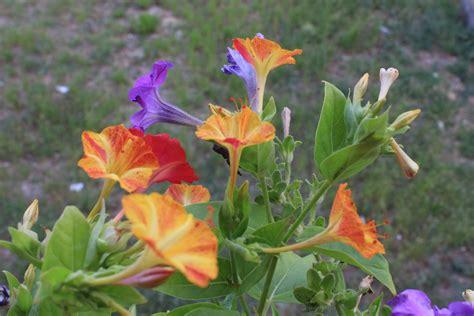 colori fiori fiori sinonimo di colori juzaphoto